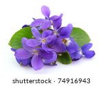 Violets Flowers Close Up
