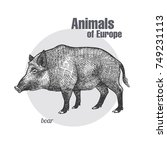 boar hand drawing. animals of... | Shutterstock .eps vector #749231113