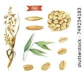 watercolor illustration of oat...   Shutterstock . vector #749254183