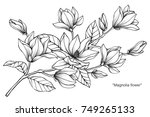 magnolia flower. drawing and... | Shutterstock .eps vector #749265133