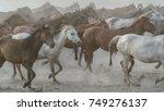 Stock photo kayseri turkey august horses run gallop in dust 749276137