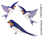 swallows on white background.... | Shutterstock .eps vector #749319877