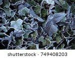 Frozen Blue  Leaves Background...