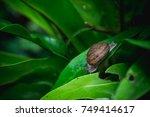 low key  small snail on green... | Shutterstock . vector #749414617
