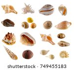 a collection of seashell from... | Shutterstock . vector #749455183