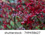 autumn bush with red fruits | Shutterstock . vector #749458627