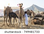 pushkar   india 27 october 2017 ... | Shutterstock . vector #749481733