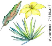 tropical plants in a watercolor ... | Shutterstock . vector #749501647