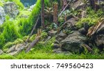 Close Up Image Of Forest In...