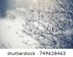 Branches Of Bushes In Snow In...