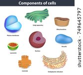 components of human cells... | Shutterstock .eps vector #749645797
