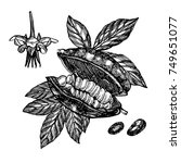 chocolate cocoa beans vector... | Shutterstock .eps vector #749651077