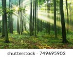 morning in the forest | Shutterstock . vector #749695903