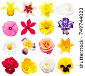 collection of beautiful iris ... | Shutterstock . vector #749744023