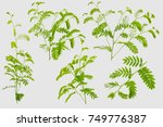 tamarind leaves isolated on... | Shutterstock . vector #749776387
