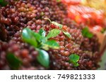 red wine grapes | Shutterstock . vector #749821333