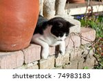 A Cat Lying On A Wall  Looking...