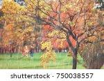 autumn park  rainy background   ... | Shutterstock . vector #750038557