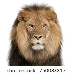 Closeup Lion Panthera Leo 8 - Fine Art prints