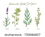 watercolor herbs set volume 4.... | Shutterstock . vector #750086857