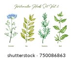 watercolor herbs set volume 2.... | Shutterstock . vector #750086863