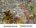 an old jewish cemetery with...   Shutterstock . vector #750091333