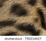 Macro Of A Bengal Kitten's Fur...
