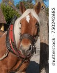 Small photo of portrait of two horses hitched to a cart in alsatian village