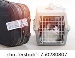 Cat In The Airline Cargo Pet...