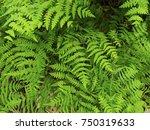 Natural Fern Leaf Cover Closeu...