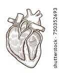 vector engraving heart. vector... | Shutterstock .eps vector #750352693