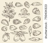 collection of almond  almond... | Shutterstock .eps vector #750434323