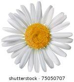 vector chamomile flower isolated | Shutterstock .eps vector #75050707