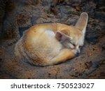 Fennec Fox Or Desert Fox...