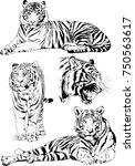 set of vector drawings on the... | Shutterstock .eps vector #750563617