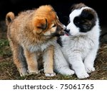 Puppies Showing Affection  To...