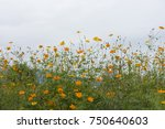 yellow flower field on cloudy... | Shutterstock . vector #750640603