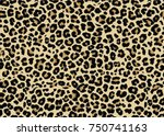 Leopard Pattern Design  Vector...