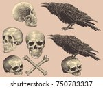 skulls  bones and crows. design ... | Shutterstock .eps vector #750783337