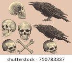 Skulls  Bones And Crows. Desig...