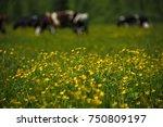 summer flowers of siberia   Shutterstock . vector #750809197