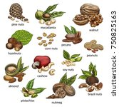sketch variety of nuts food... | Shutterstock .eps vector #750825163