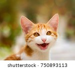 smiling kitten with wonderful... | Shutterstock . vector #750893113