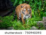 bengal tiger standing with... | Shutterstock . vector #750940393
