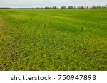 the green field. agriculture.   Shutterstock . vector #750947893