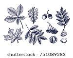 autumn leaves set hand drawn... | Shutterstock .eps vector #751089283