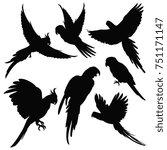 Stock photo  parrots amazon jungle birds silhouettes isolated on white black silhouette parrots illustration 751171147