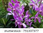 orchids in the garden. look and ... | Shutterstock . vector #751337377