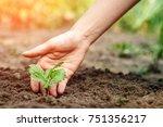 women's hands put a sprout in... | Shutterstock . vector #751356217