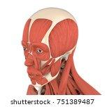 human facial muscles anatomy... | Shutterstock . vector #751389487